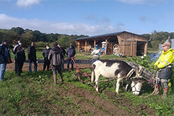 NL accueil social a la ferme